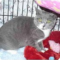 Adopt A Pet :: Juni-Bug - Colmar, PA
