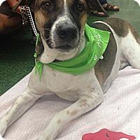 Adopt A Pet :: Sasha - Coral Springs, FL