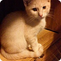 Adopt A Pet :: Aing - Fairborn, OH