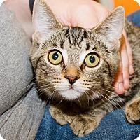 Adopt A Pet :: Calia - Irvine, CA