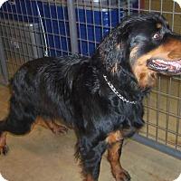 Adopt A Pet :: ROXY - Medford, WI