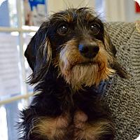 Adopt A Pet :: Mellow - Gainesville, FL