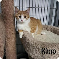 Adopt A Pet :: Kimo and Kimmy - Redwood City, CA