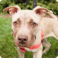 Adopt A Pet :: Mufasa - Villa Park, IL