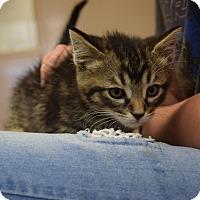 Adopt A Pet :: Gary - Bucyrus, OH