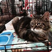 Adopt A Pet :: Jasmine - Harrisburg, NC