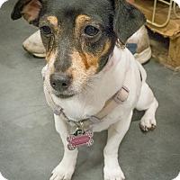 Adopt A Pet :: Betsy - Loudonville, NY