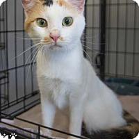 Adopt A Pet :: Calypso - Merrifield, VA