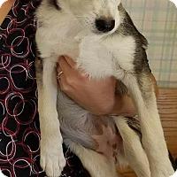 Adopt A Pet :: Flora - Denver, CO