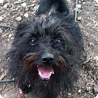 Adopt A Pet :: Zoe - Austin, TX