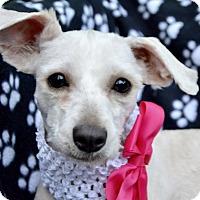 Adopt A Pet :: Rosey Posey - Irvine, CA