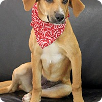 Adopt A Pet :: Fancy - Dalton, GA