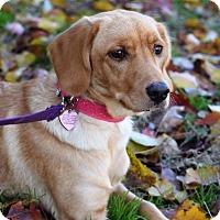 Adopt A Pet :: Fathye - Fenton, MO