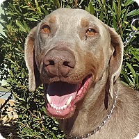 Adopt A Pet :: Wally - Las Vegas, NV