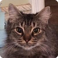 Adopt A Pet :: Dani - Mobile, AL