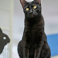 Adopt A Pet :: Moose - Montclair, CA