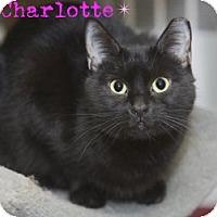 Adopt A Pet :: Charlotte - River Edge, NJ