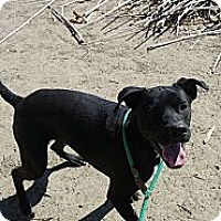 Adopt A Pet :: SHADOW - Valley Village, CA