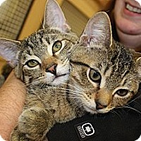 Adopt A Pet :: Paco and Taco - Vero Beach, FL