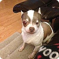 Adopt A Pet :: Cherry Berry - Seattle, WA