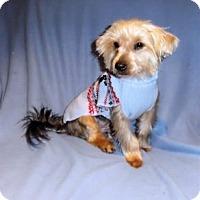 Adopt A Pet :: Little Joe - Mooy, AL