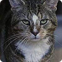 Adopt A Pet :: Benny - Columbia, MD