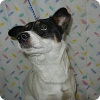 Adopt A Pet :: Drew Barkymore ADOPTED!! - Antioch, IL