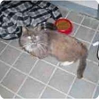 Adopt A Pet :: Fang - Hamburg, NY