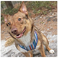 Adopt A Pet :: Kami - Forked River, NJ