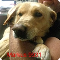 Adopt A Pet :: Markus - baltimore, MD