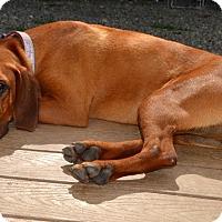 Adopt A Pet :: Winchester - Bakersville, NC