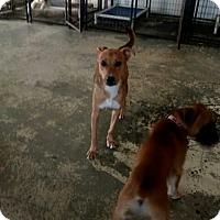 Adopt A Pet :: Tarot - West Hartford, CT