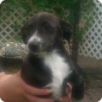 Adopt A Pet :: Peanut - Antioch, IL