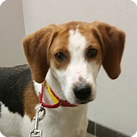 Adopt A Pet :: Michelle  **ADOPTION PENDING** - Fairfax, VA