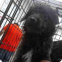 Adopt A Pet :: A266698 - Conroe, TX