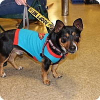 Adopt A Pet :: Reggie - Yuba City, CA
