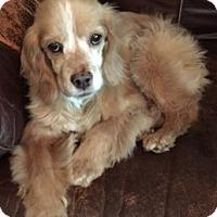 Adopt A Pet :: Maci-ADOPTED! - Sacramento, CA