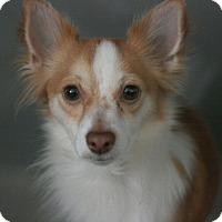 Adopt A Pet :: Sammy - Canoga Park, CA
