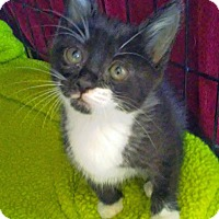 Adopt A Pet :: May - Troy, MI