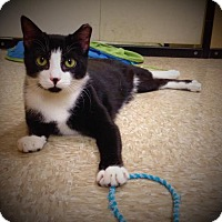 Adopt A Pet :: Tony (Bonded to Tippy) - Richmond Hill, ON