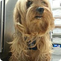 Adopt A Pet :: Mickey - Bloomington, IL
