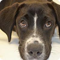 Adopt A Pet :: Boomer - Brunswick, ME