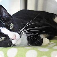 Adopt A Pet :: Buttons - Howell, MI