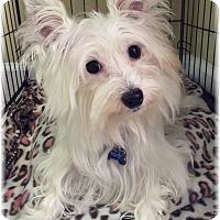 Adopt A Pet :: Piper - Palm City, FL
