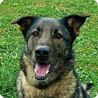 Adopt A Pet :: Scout - Crossville, TN