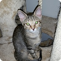 Adopt A Pet :: Misty - Turnersville, NJ