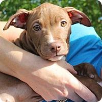 Adopt A Pet :: Simone - Mayer, MN