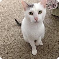 Adopt A Pet :: Izzy - Temecula, CA