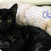 Adopt A Pet :: Olaf - Covington, LA