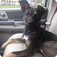 Adopt A Pet :: Gemma - Morrisville, NC
